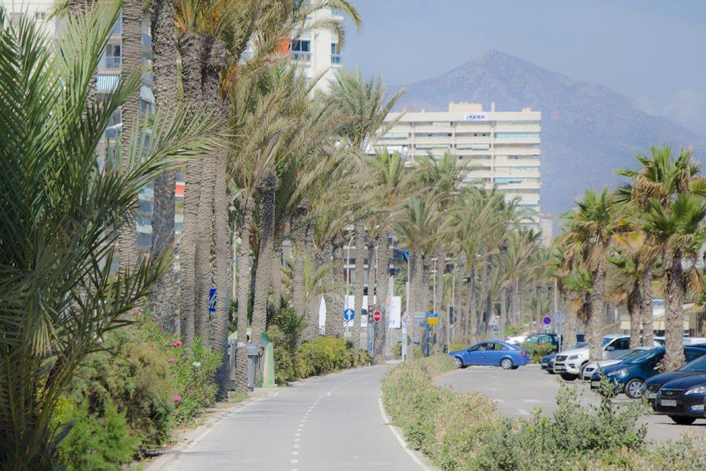 consultoría SEO - agencia de publicidad Alicante - estudio de diseño web