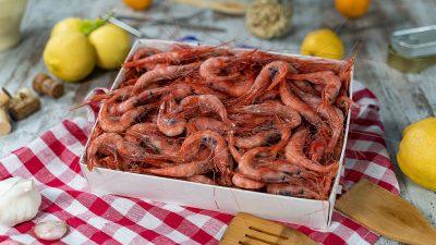 00 fotografía de producto congelado en alicante - mariscos Santapola
